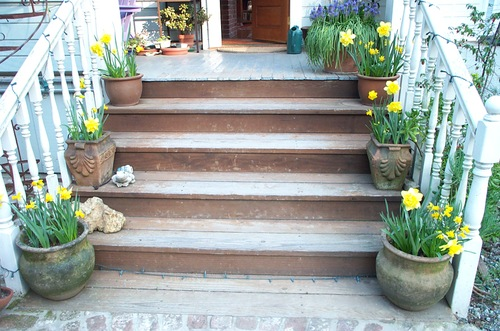 Doffodils_on_stairs