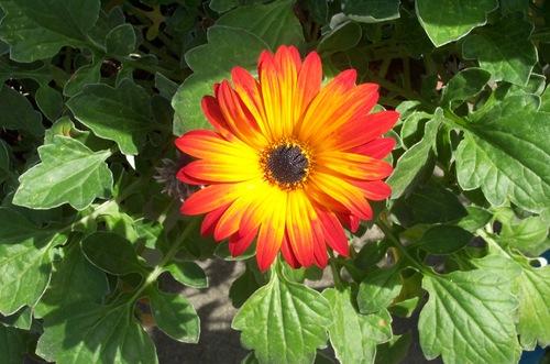Happy_orange_flower