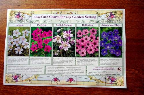 Brochure_of_geraniums