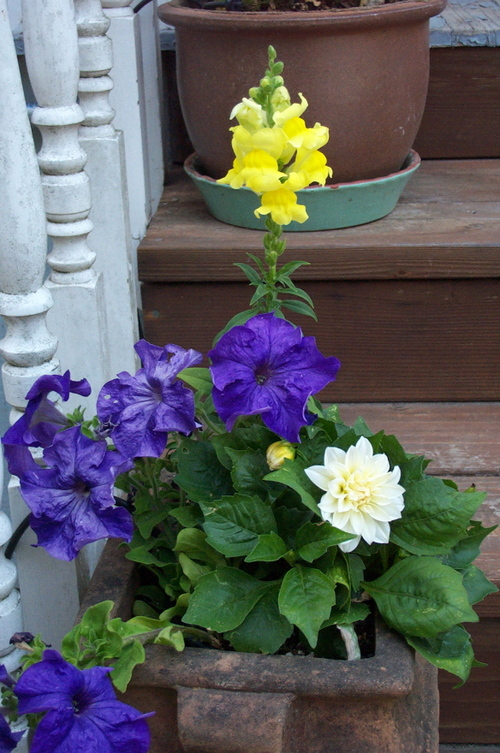 Planter_blue_white_yellow