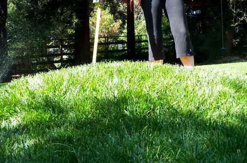 Lumpy_lawn