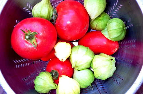 Tomatoes_in_colander