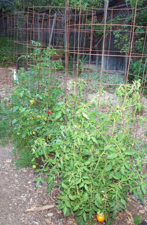 Tomato_cages_3