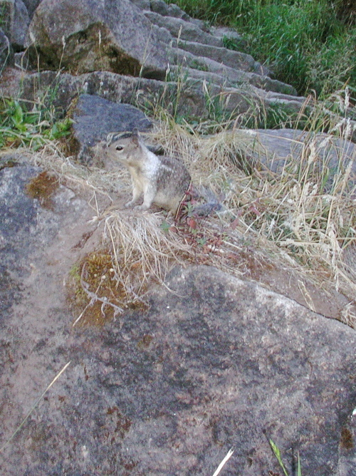 Scary_evil_ground_squirrel